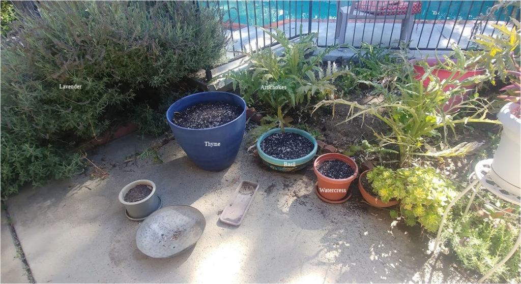 Garden - North Planters