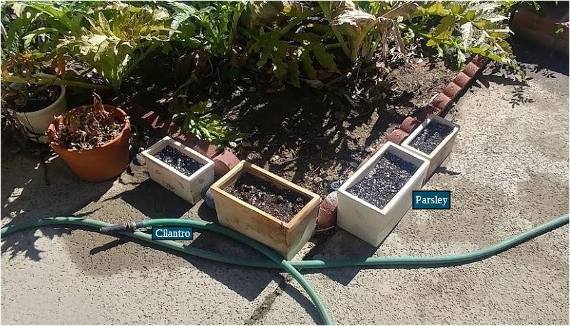 Garden - Southern Pots